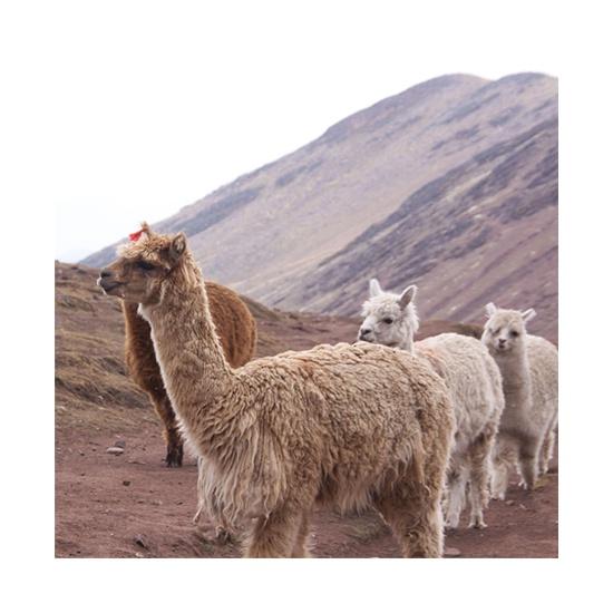 Alpaca Plush about image