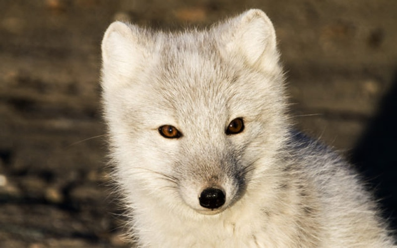 In the News: Fur flies in Norway over ban on mink and fox farms