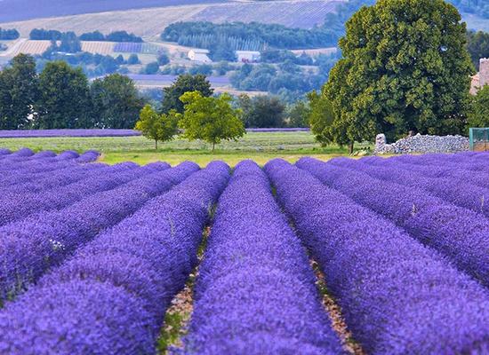 HERA MD Provence hero image